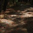 木漏れ日の中の枯れ葉