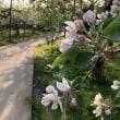 花の中の道