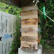 今日の蜜蜂