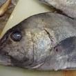 岩手めんこい「ホウボウ」♪三重「コショウダイ(胡椒鯛)」♪かねしげ刺身バイキング☆彡発寒かねしげ鮮魚店。