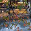 11月中旬の暖かい日‥黄昏時から暗くなるまで中之島公園で 2