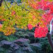 万博公園紅葉散策