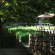 私の散歩道 福岡城址