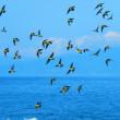 『アオバト』 空と海の碧