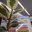 きれいな植木