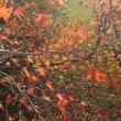 秋の景色。