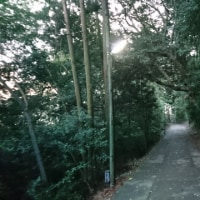 朝のこんぴらさんでヤマガラに出会う_20181019