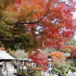 ・ 鎌倉宮の紅葉 2017