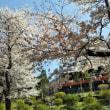 3月29日(木)上野公園