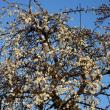 春を待つ日