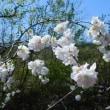 いま咲いている花!