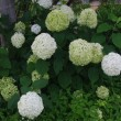夏のガーデン (母の庭♪)