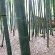 鎌倉を知る ーー 報国寺 坐禅会 ーー