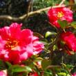 冬の花たち