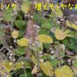2018/12/06 我が家の草の様子
