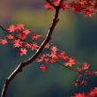 「Xの彩り」 いわき 夏井川渓谷にて撮影! 紅葉