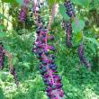神代植物公園・植物多様性センター