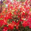 百花繚乱、花がいっぱい
