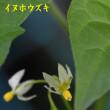 2018/06/17 久しぶりの芋谷