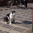 漱石の猫と千駄木