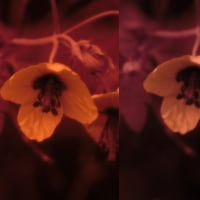 紫外線撮影2