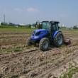 大豆の生育状況