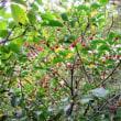 北高上緑地「秋の樹木ツアー」開催(平成29年11月11日)