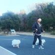 志津城跡と浜名湖GPとオフ会のお知らせ