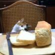手作りパンと猫2