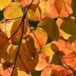 秋を探しに♪ 後編