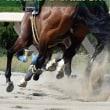 【HBAトレーニングセール2018(HBA Training Sale、2歳)】の「前日公開調教」が実施!(228頭が計測)