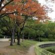 長居植物園のダリア