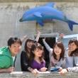 Ocean野生イルカと泳ごう☆利島