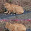 観光道路の猫さん