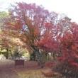 紅葉狩り花貫渓谷を歩く