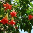 『季節の花』 エンジェル