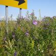 ラムサール条約登録湿地のウトナイ湖ドローン:9月24日2017