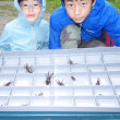 昆虫採取 ほぼ100%!