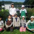 サツマイモ収穫(4年生)