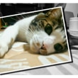猫のはなちゃん 36歳(#^.^#)