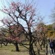 大阪城と梅林(その1)