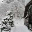 Gifu / Shirakawa-go Village Trip ( 5 ) ( 白川郷旅行)