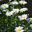 6月の花いろいろ