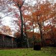 【京都幕間旅情】宝厳院,初冬紅葉薫る京都嵐山の名勝獅子吼ノ庭は古くて新しく懐かしい情景