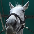 馬の仕事につくために アニベジ奮闘記エピソード294