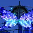 夜の蝶(?)
