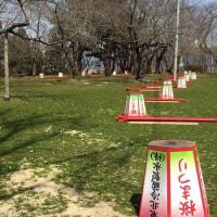 楯山公園開花状況 2016.04.05