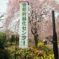 兵庫県北部へお花見ドライブ