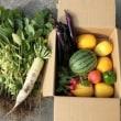 夏野菜の大収穫、しかし腎臓に優しく食べましょう!