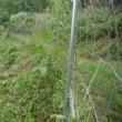 雨中に夢中になる道普請と称する草刈り